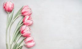 可爱的粉红彩笔郁金香束,在轻的背景,顶视图的花卉边界 布局春天假日 免版税库存照片