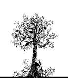 可爱的结构树 免版税库存图片