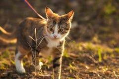 可爱的美丽的户外姜传神猫 免版税库存照片