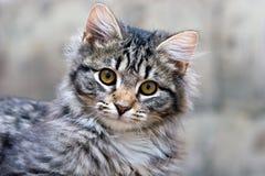 可爱的美丽的猫逗人喜爱的小猫纵向 库存照片