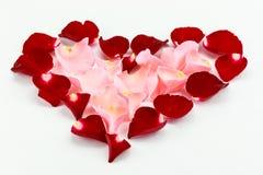 可爱的美丽的红色和桃红色玫瑰的瓣美好的心脏 免版税库存照片