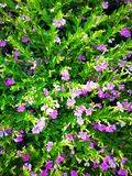 可爱的花叶子 免版税图库摄影