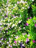 可爱的花叶子 免版税库存图片