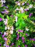 可爱的花叶子 免版税库存照片
