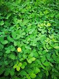 可爱的花叶子 图库摄影