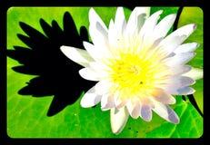 可爱的莲花 库存图片