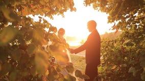 可爱的走在惊人的绿色公园的新婚佳偶新娘和新郎在日落 股票视频