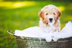 可爱的逗人喜爱的幼小小狗 图库摄影