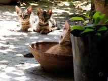 可爱的逗人喜爱的猫小猫 库存照片