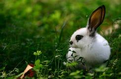 可爱的野兔 图库摄影