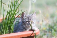 可爱的野生小猫 免版税库存照片