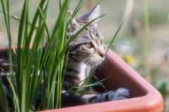 可爱的野生小猫 免版税图库摄影
