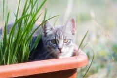 可爱的野生小猫 库存照片