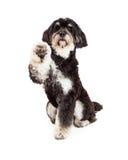 可爱的长卷毛狗混合品种狗延伸的爪子 免版税库存图片