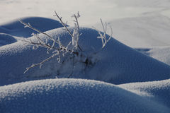 可爱的雪组装 库存照片