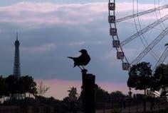 可爱的鸟 免版税库存照片