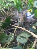 可爱的婴孩兔宝宝 库存照片