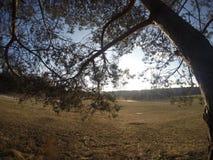 可爱的结构树 库存图片