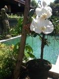 可爱的水池在Ubud的中心,围拢由绿叶 免版税库存图片