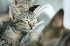 紧紧可爱的滑稽的逗人喜爱的小猫猫关闭眼睛睡眠在软的白色布料床上 库存照片