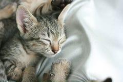 紧紧可爱的滑稽的逗人喜爱的小猫猫关闭眼睛睡眠在软的白色布料床上 免版税图库摄影