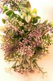 可爱的紫色花 免版税库存图片