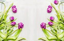可爱的lila郁金香,在白色木背景,边界的花框架 库存照片
