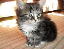 可爱逗人喜爱的矮小的镶边蓬松的小猫 免版税库存照片