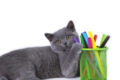 可爱,灰色,模糊良种英国小猫说谎,拿着爪子玻璃标志,在白色背景 免版税库存图片