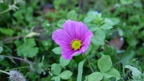 0 8可用的eps花卉版本墙纸 免版税库存照片