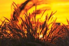 可看见通过干草丛林的日出 库存照片