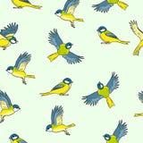 可笑的样式北美山雀春天鸟五颜六色的无缝的样式 向量例证