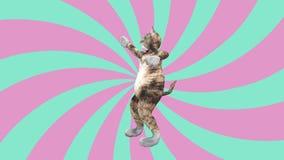 可笑的猫咪挥动的爪子和尾巴在一种精力充沛的跳舞的夹子夏天心情 股票录像