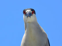 可笑的鸟 免版税库存图片