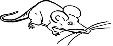 可笑的鼠标 免版税库存照片