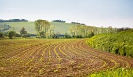 可耕的春天土地 绿色春天农田 晴朗的农村春天la 免版税库存图片