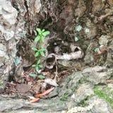 可能的小的植物 库存图片