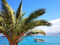 可西嘉岛海岛地中海掌上型计算机摄影被采取的结构树 免版税库存照片