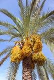 可西嘉岛海岛地中海掌上型计算机摄影被采取的结构树 意大利西西里岛 库存照片