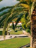 可西嘉岛海岛地中海掌上型计算机摄影被采取的结构树 日期树在黑山 免版税库存图片