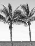 可西嘉岛海岛地中海掌上型计算机摄影被采取的结构树 图库摄影