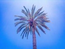 可西嘉岛海岛地中海掌上型计算机摄影被采取的结构树 库存照片