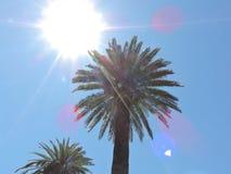 可西嘉岛海岛地中海掌上型计算机摄影被采取的结构树 免版税图库摄影