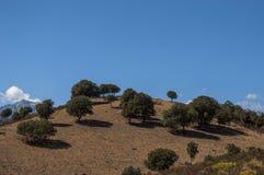 可西嘉岛,狂放的风景,欧特Corse,上部Corse,法国,欧洲, Haut Asco, Asco谷,可西嘉岛,海岛的高中心 免版税库存照片
