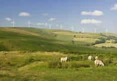 可选择能源农厂来源风 库存图片