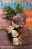 可食狂放的可食的未加工的蘑菇的牛肝菌蕈类, m的鲜美成份 免版税库存照片