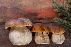 可食狂放的可食的未加工的蘑菇的牛肝菌蕈类, m的鲜美成份 免版税库存图片