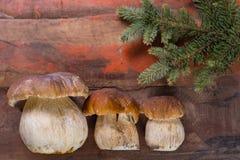可食狂放的可食的未加工的蘑菇的牛肝菌蕈类, m的鲜美成份 库存照片