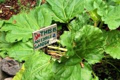 可食的庭院 库存照片