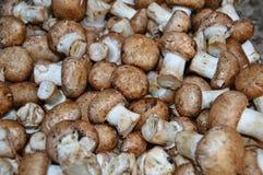 可食的新鲜的栗子蘑菇 库存图片
